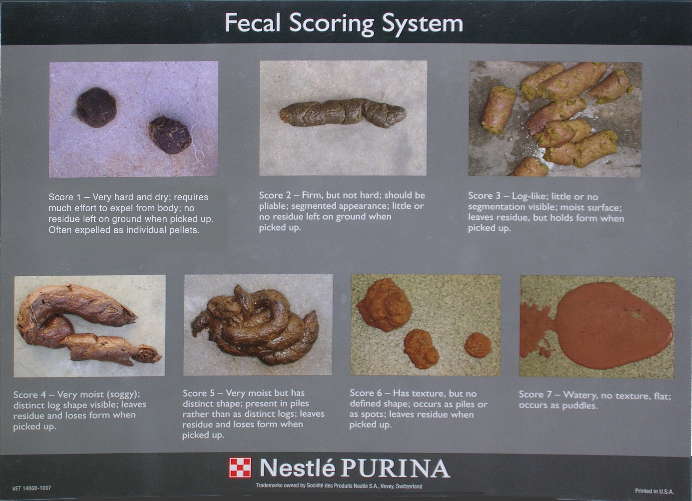 What's your dog's poop score?