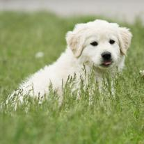 puppy_consult.jpg