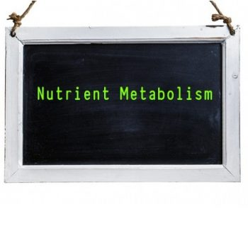 Nutrient Metabolism When Fasting Your Dog