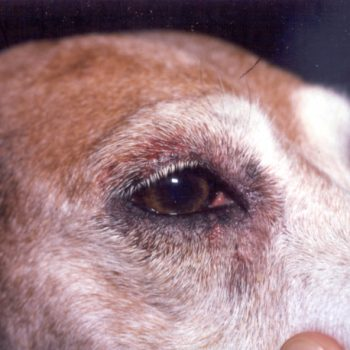 Can Diet Be Related to Skin Problems in Dogs?