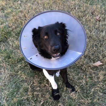 Is Pet Insurance Worthwhile?