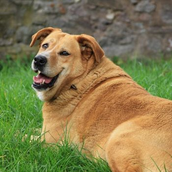 Your Fat Dog – Yes, Yours!