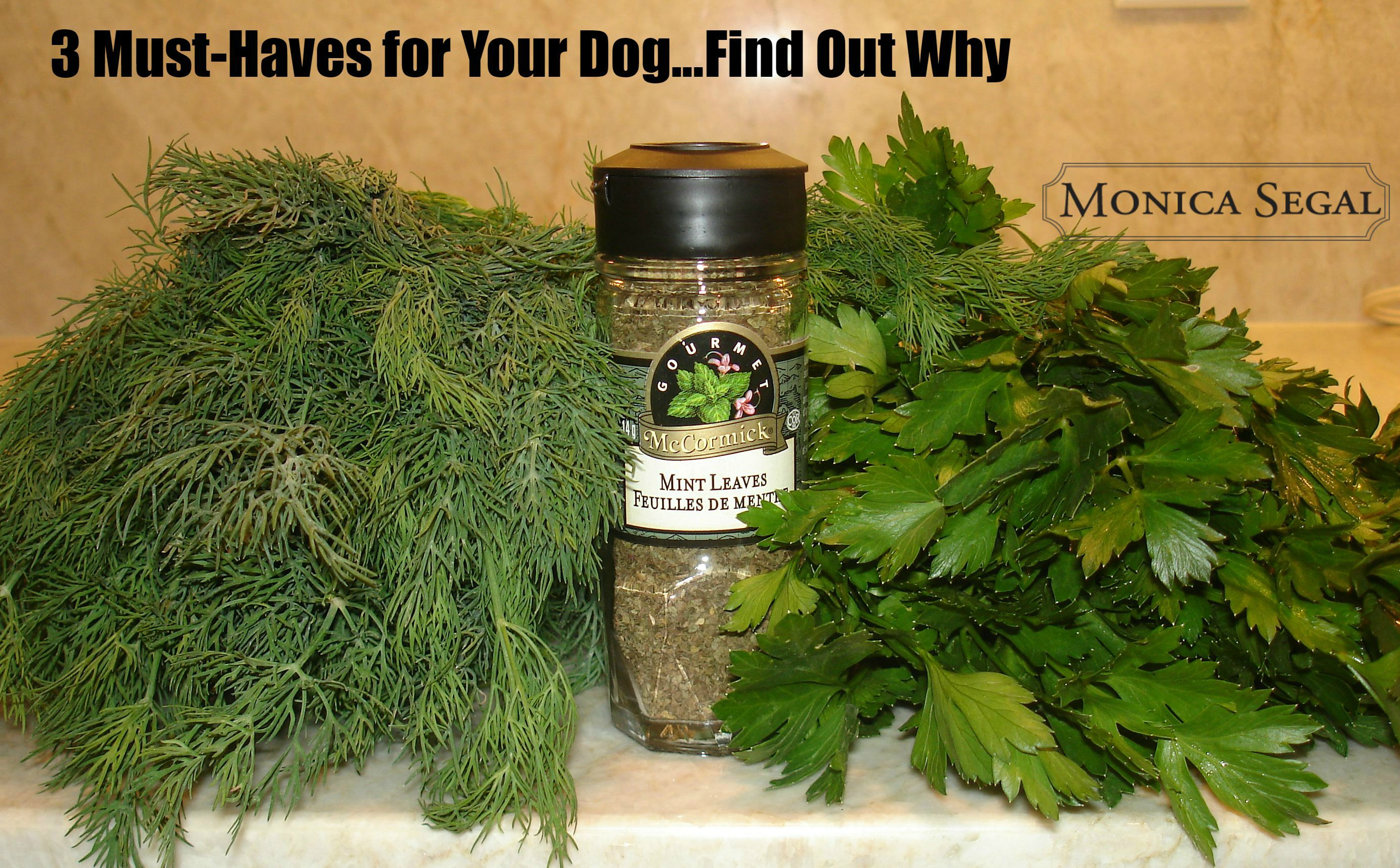 3 Must-Have Herbs For Your Dogs