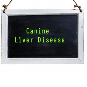 Canine Liver Disease(s)