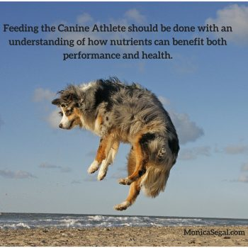 Diets for Canine Athletes